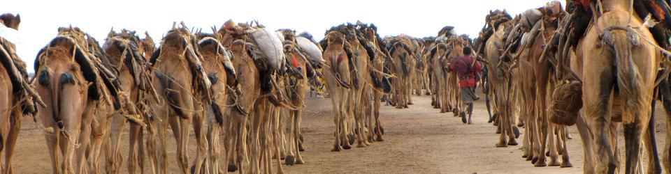 Aisha Tours Ethiopia