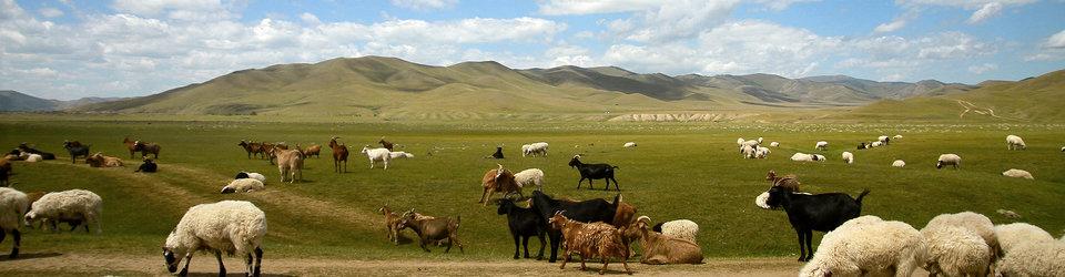Evasion Mongolie