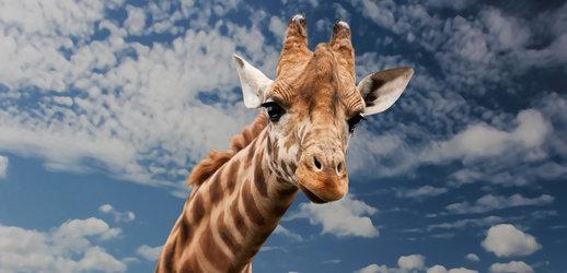 Leboo Safaris