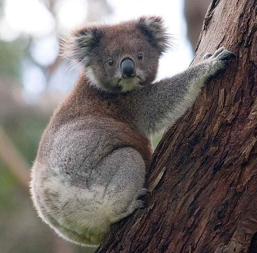 Australie 6