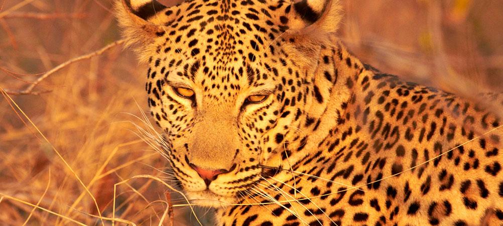 Afrique du Sud 3