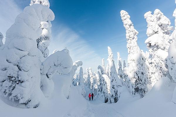 Paysage hivernal au Québec