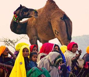 Quand partir en Inde du Nord selon Namaskar India Tour ?