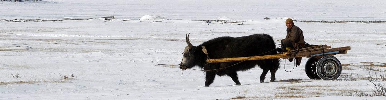 Récit : la Mongolie en hiver