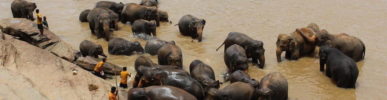 Voyage en famille au Sri Lanka : les conseils d'un expert