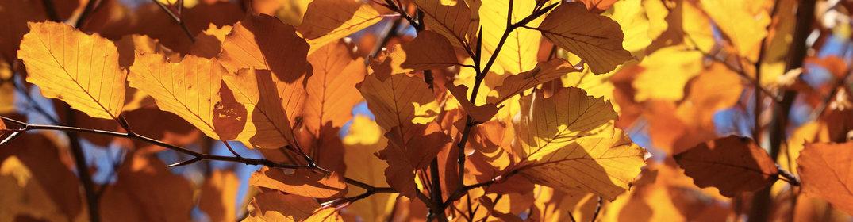 L'automne au Québec : un spectacle