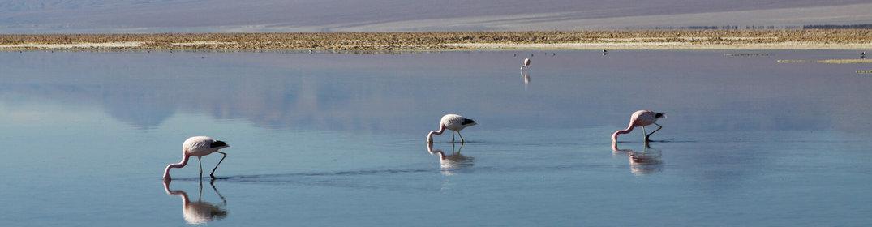 Voyager eco-responsable au Chili