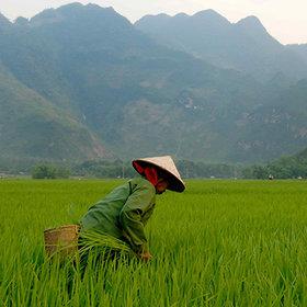 Michelle et Guy vous racontent le Vietnam avec Motaïba