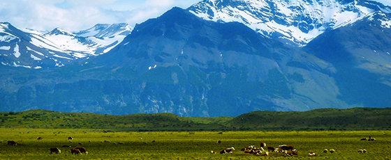 Patagonie Argentine: Glaciers et estancias du bout du monde