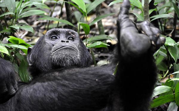Rwanda 8