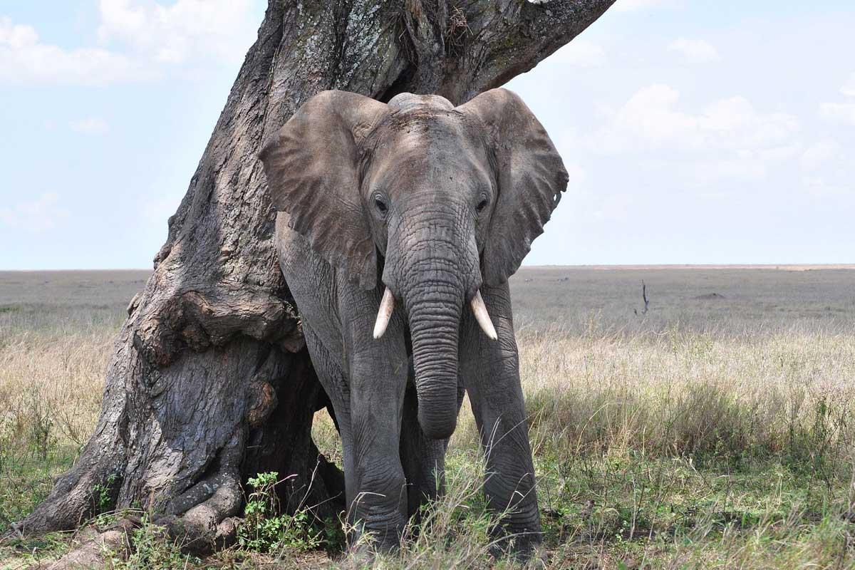 Tanzanie 5