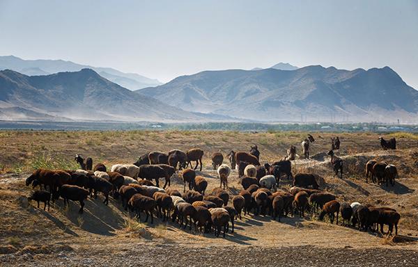 Esprit nomade sur la Route de la Soie