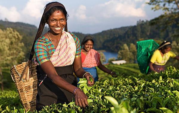 Le Sri Lanka dans tous ses états