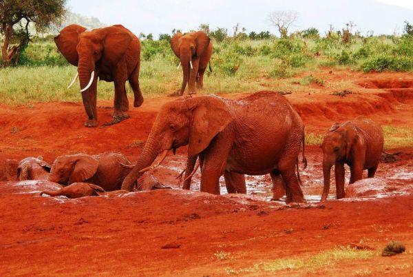 8 jours de safari de luxe au Kenya