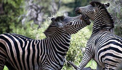 voyage Afrique du Sud 4
