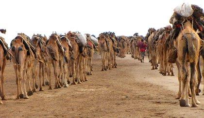 Danakil éthiopien, entrailles de la Terre