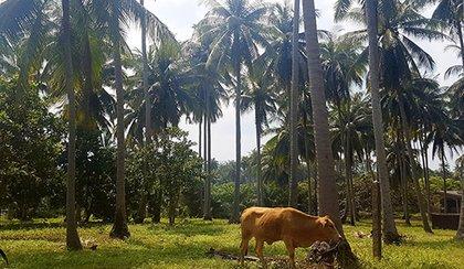voyage Thaïlande 3