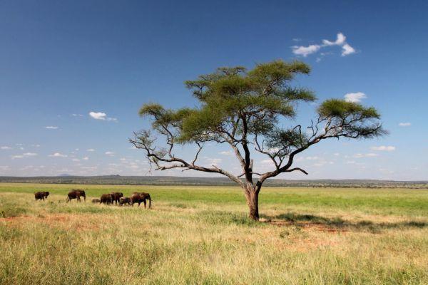 Safari dans les parcs de Tanzanie du Nord et plage de l'océan Indien