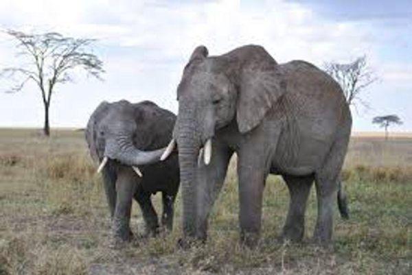 Safari découverte & Zanzibar