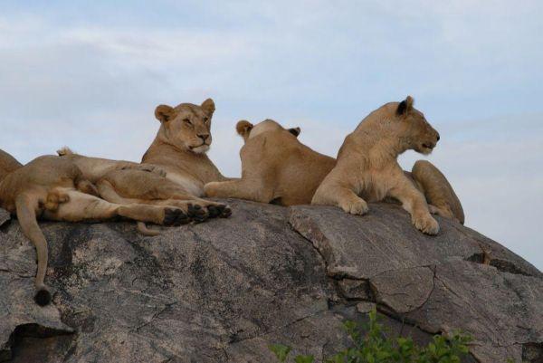 Tanzanie 11
