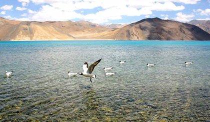 Voyage en voiture sur un terrain lunaire au Ladakh