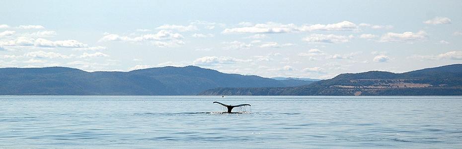 article-voyage-quebec-dany-kean-aveugle-baleine