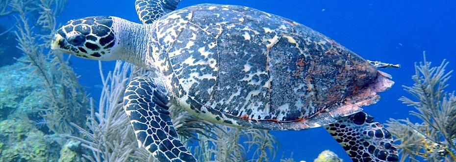 tresors-du-monde-barriere-corail-belize