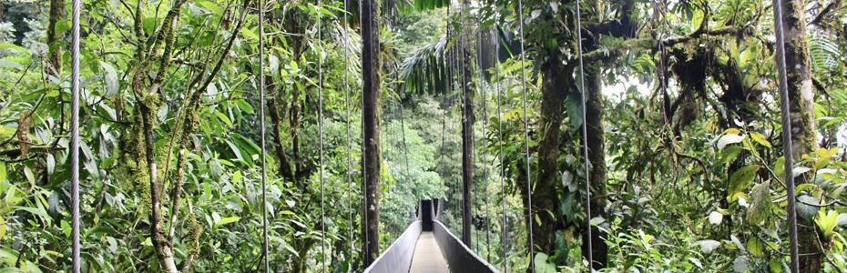Forêt tropicale au Costa Rica