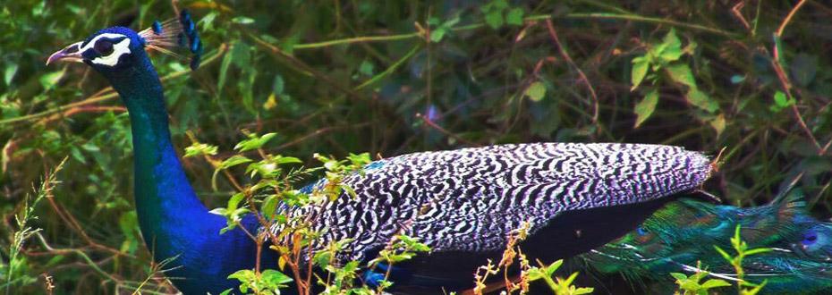 faune et flore : merveilles du sri lanka