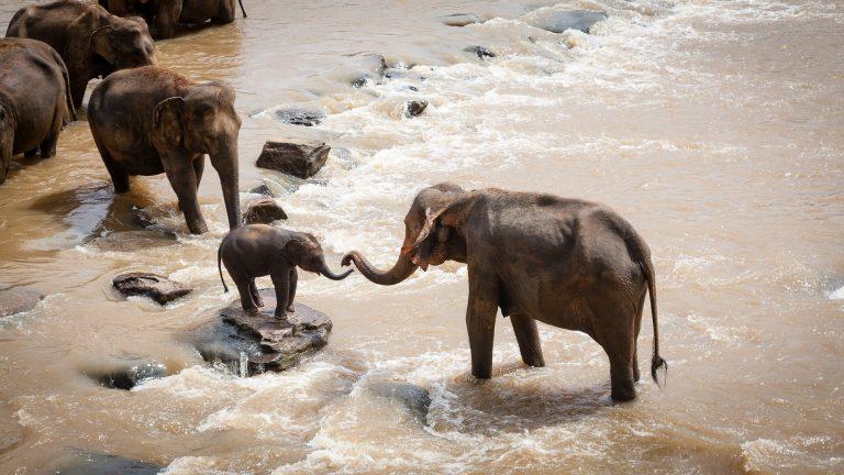 quel budget safari afrique tanzanie kenya afrique du sud namibie botswana